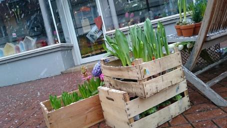 Februar Blumen und mehr